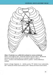 Anatomske skice