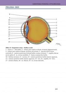 Barvna slika očesa